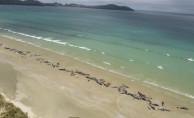 Yeni Zelanda'da 145 pilot balina telef oldu