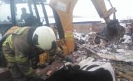 Balıkesir'de çatısı çöken ahırdaki büyükbaş hayvanlar telef oldu