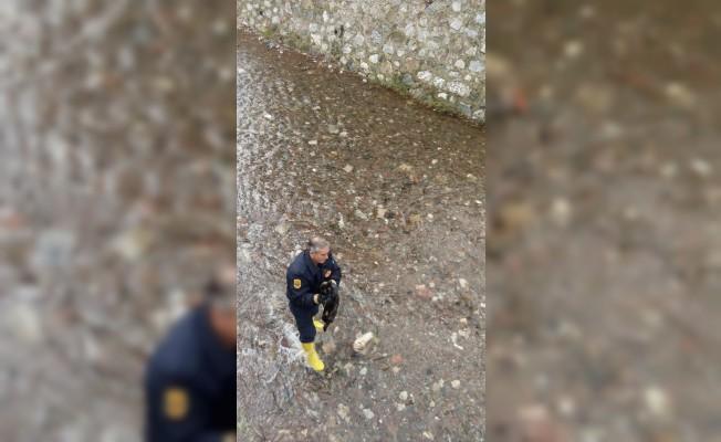 Derede mahsur kalan kediyi itfaiye kurtardı