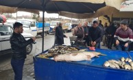 Karasu Nehri'nde 82 kiloluk turna balığı yakalandı