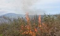 Samsun'da çalılık yangını