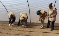 TİKA'dan Kuzey Makedonya'da tarıma destek