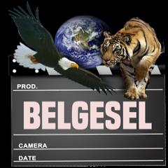BELGESEL